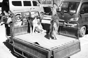 chengde-scha%cc%88ferhunde